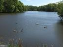 Regional Lake With Wildlife Galore! - 20422 SUMMERSONG LN, GERMANTOWN