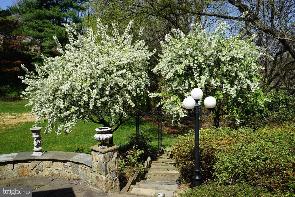 Blooming Apple Trees frame the walk from the patio - 2747 N NELSON ST, ARLINGTON