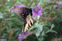 Abundant wildlife. - 17244 RAVEN ROCKS RD, BLUEMONT