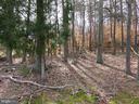 Wooded area beside house - 112 COLEBROOK RD, FREDERICKSBURG