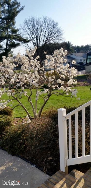 View from the front porch - 2407 FLAG MARSH RD, MOUNT AIRY