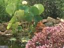 Lily pads in fish pond - 335 FODDERSTACK RD, WASHINGTON