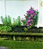 Gardens in bloom in season - 1012 MERCER PL, FREDERICK