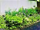 Just wait for your 3 season gardens! - 1012 MERCER PL, FREDERICK