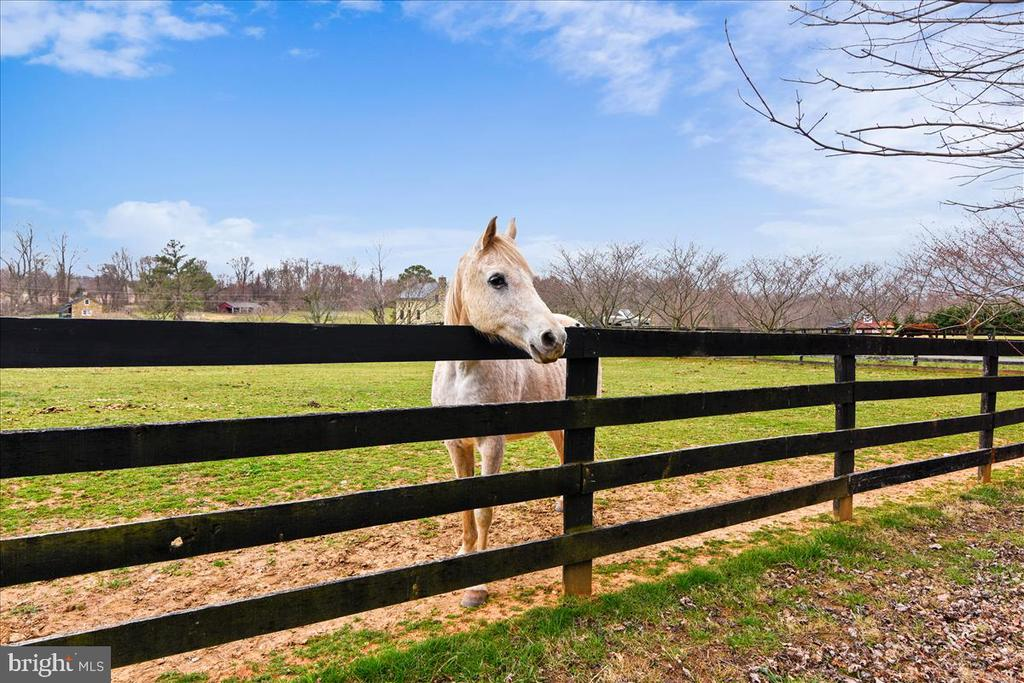 Property backs to 20+ Acre Horse Property - 40325 CHARLES TOWN PIKE, HAMILTON