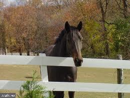 horse boarding available - 2026 FARRAGUT DR, STAFFORD