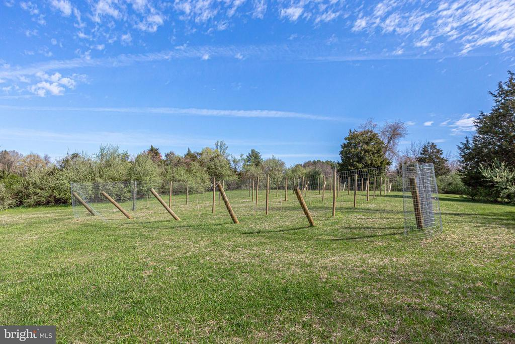 Vineyard - 14774 MILLTOWN RD, WATERFORD