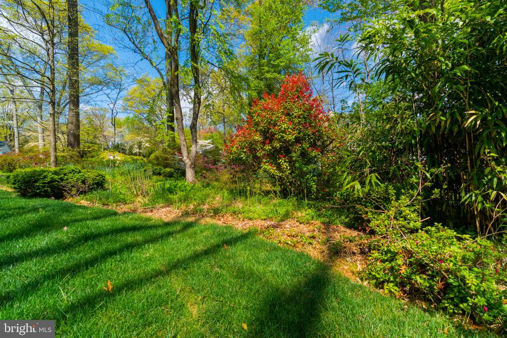 Enjoy nature in your back yard - 8604 NORFOLK AVE, ANNANDALE