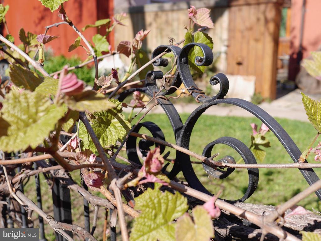 A historic gate /fence , and a sweet grape vine - 900 SOUTH CAROLINA AVE SE, WASHINGTON