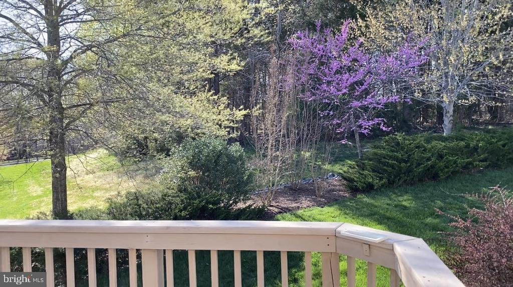 This tranquil scene is your backyard view - 132 BRIDGEWATER CIR, FREDERICKSBURG