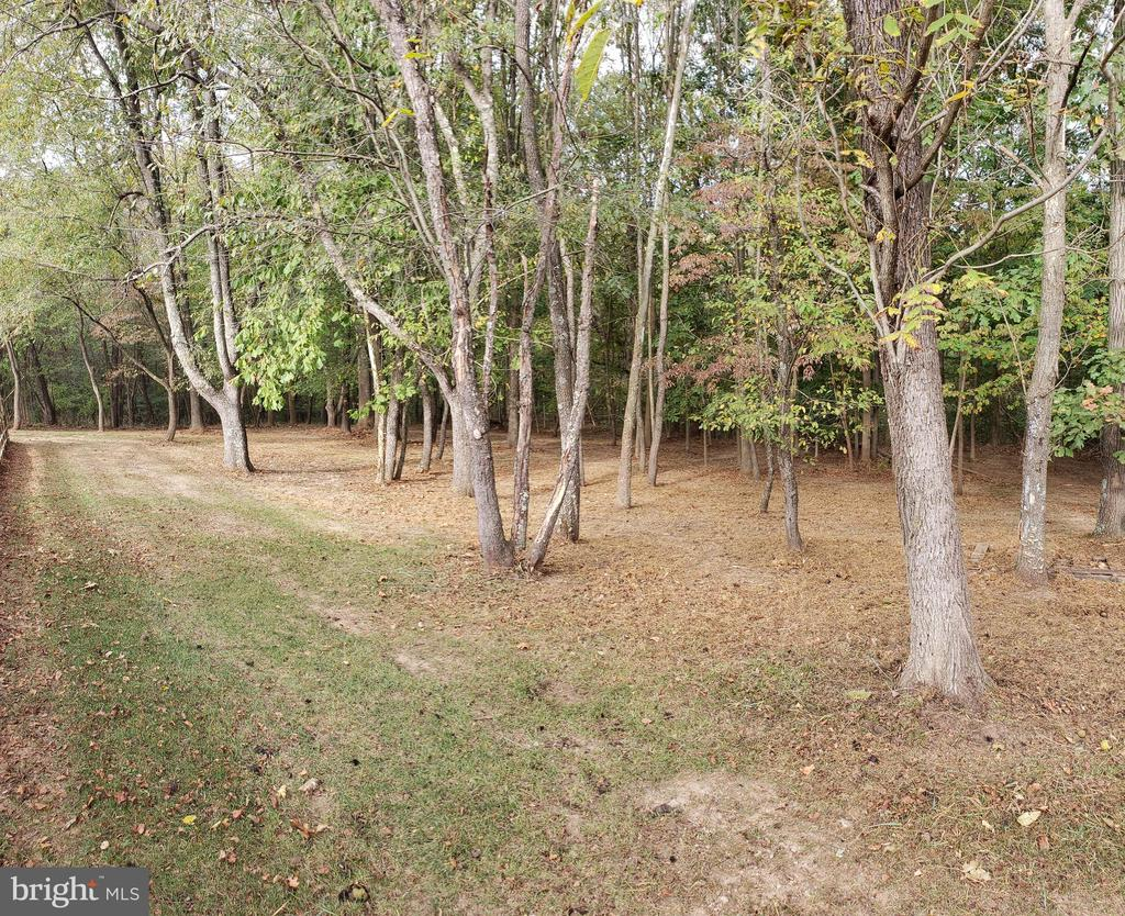 Park Like Wooded Rear - 2714 JAY BIRD CT, KNOXVILLE