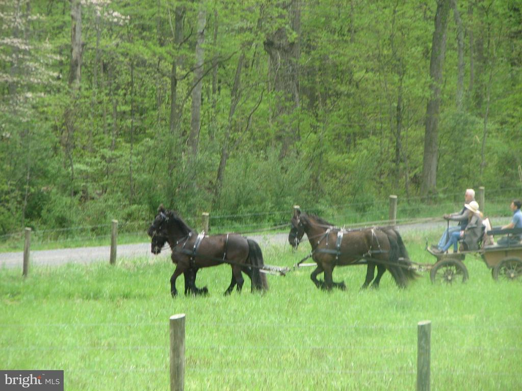 Neighbors passing by - 345 GRIMSLEY RD, FLINT HILL