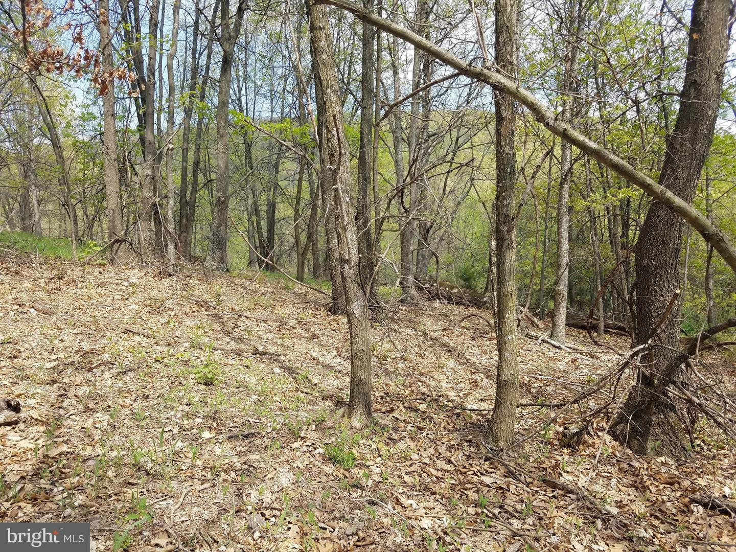 Land for Sale at Upper Tract, West Virginia 26866 United States