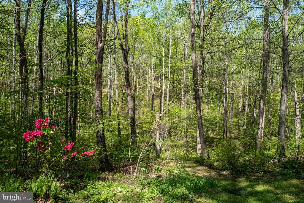 Wooded view with flowering shrubs. - 325 SANDY RIDGE RD, FREDERICKSBURG