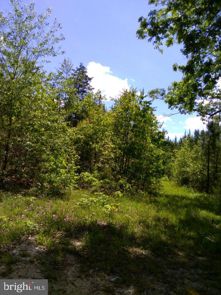 Land for Sale at Brodnax, Virginia 23920 United States