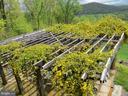 Yellow jasmine attracts Spring pollinators - 140 HORSESHOE HOLLOW LN, WASHINGTON