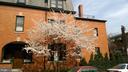 Cherry Tree - 1667 MONROE ST NW, WASHINGTON