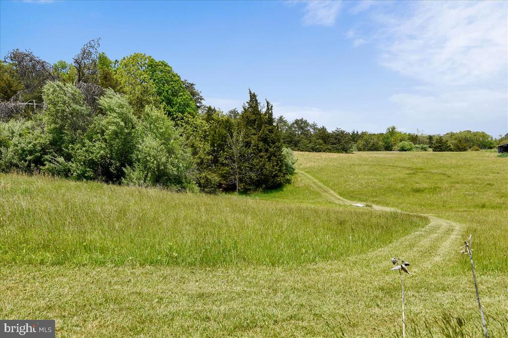 Current owner has hay made in these meadows - 2040 SALEM CHURCH RD, STEPHENS CITY