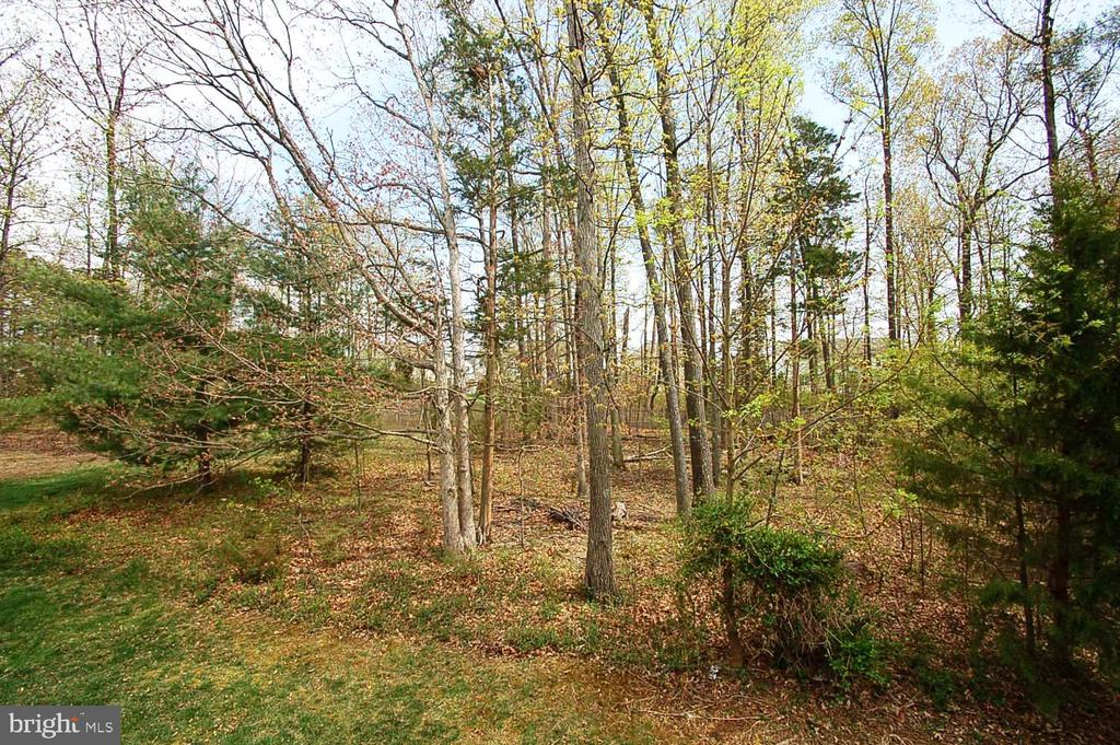 Trees - 25782 AYTHORNE LN, CHANTILLY