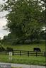 View from front porch of farmland across the road. - 5239 REELS MILL RD, FREDERICK