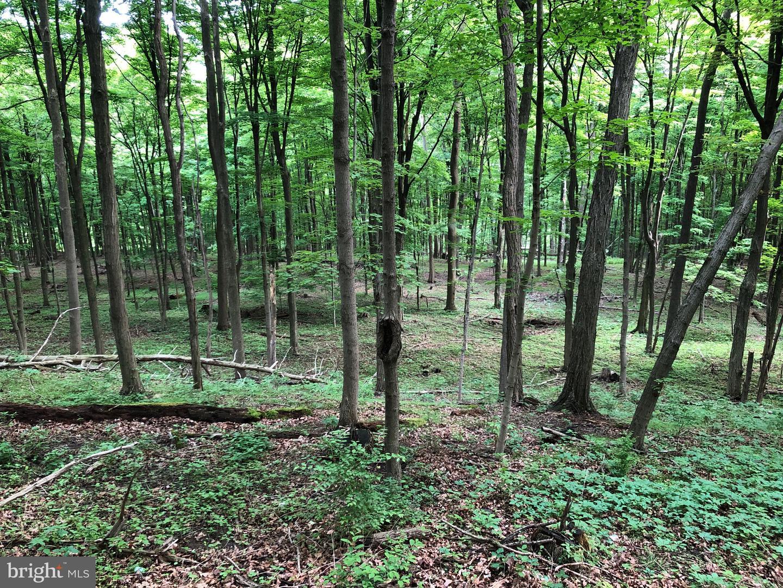 土地 為 出售 在 Ickesburg, 賓夕法尼亞州 17037 美國