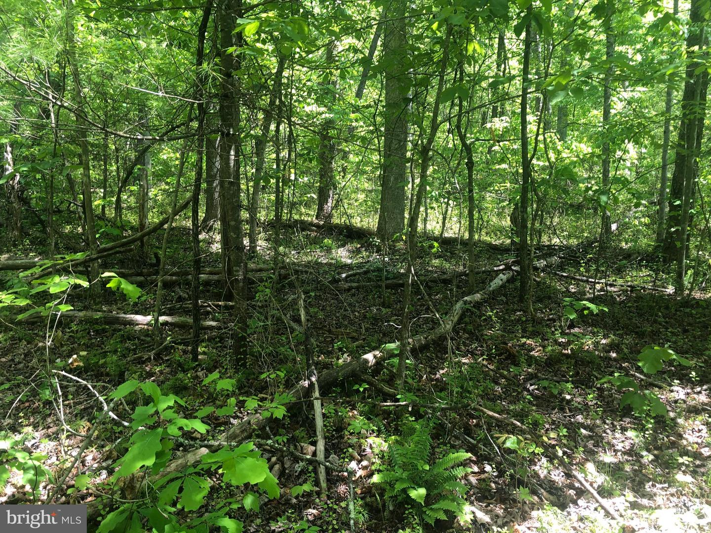 Land for Sale at Dyke, Virginia 22935 United States