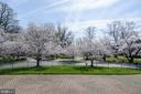 Surrounded by Cherry Trees - 6600 KENNEDY DR, CHEVY CHASE
