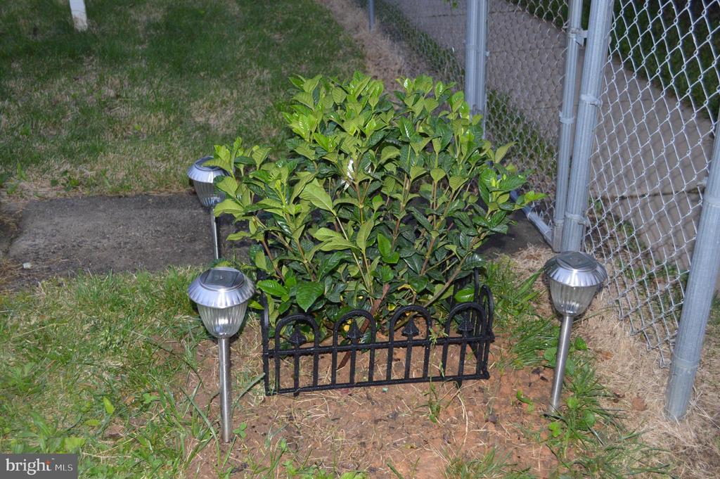 Gardenia flowering bush - 516 LINCOLN ST, ROCKVILLE