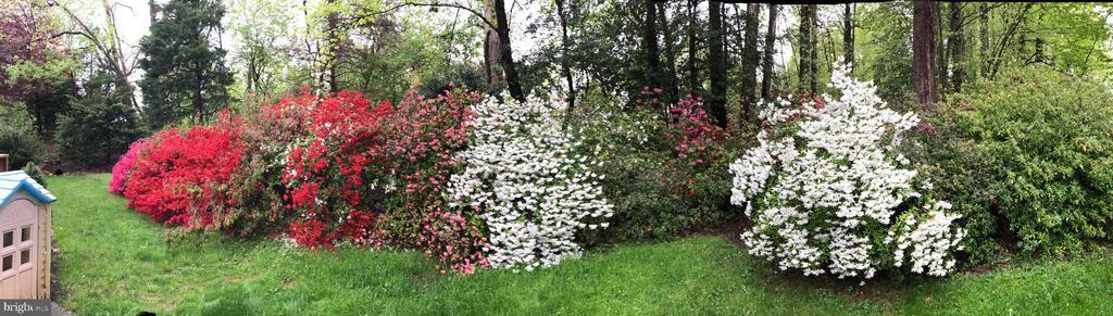 Beautiful springtime azaleas! - 9631 BOYETT CT, FAIRFAX