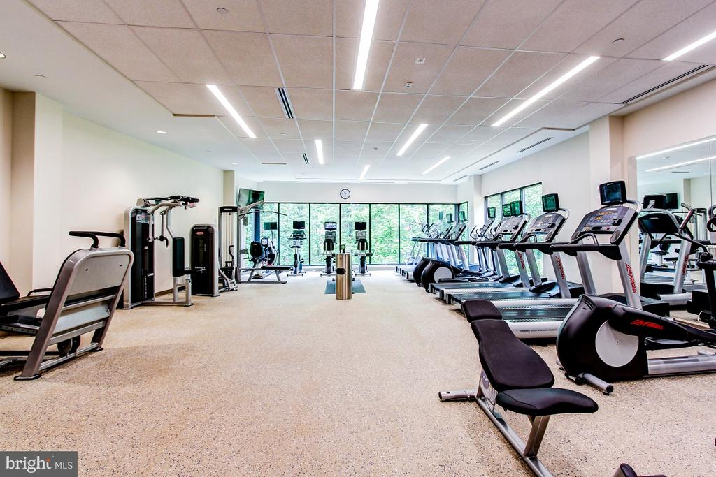 Montebello State-of-the-Art Fitness Center! - 5902 MOUNT EAGLE DR #1406, ALEXANDRIA