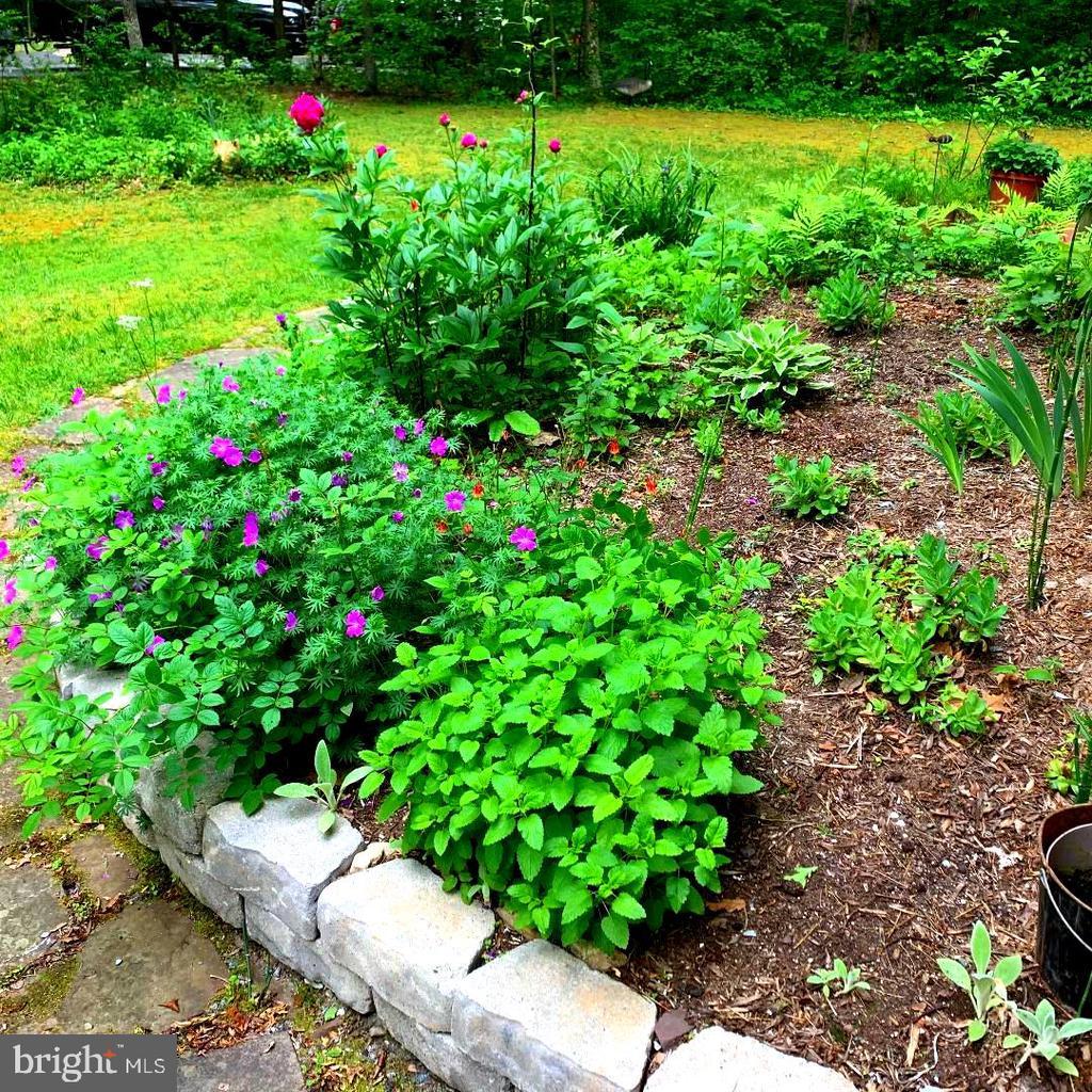 Flower Garden - Side Yard! - 12210 GLADE DR, FREDERICKSBURG