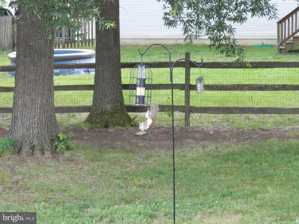 Furry Friends visit and put on a show! - 10118 S FULTON DR, FREDERICKSBURG