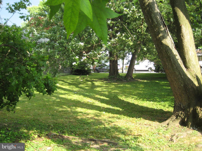 土地,用地 为 销售 在 Collingdale, 宾夕法尼亚州 19023 美国