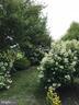 Back yard flowering bushes - 11079 SANANDREW DR, NEW MARKET