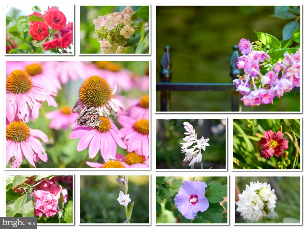 Breathtaking flowers all around the yard. - 10095 DUDLEY DR, IJAMSVILLE