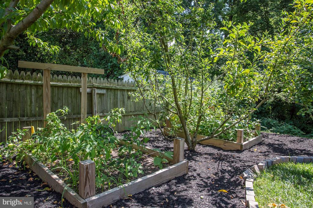 Back yard garden and fruit trees - 7717 MAGARITY RD, FALLS CHURCH