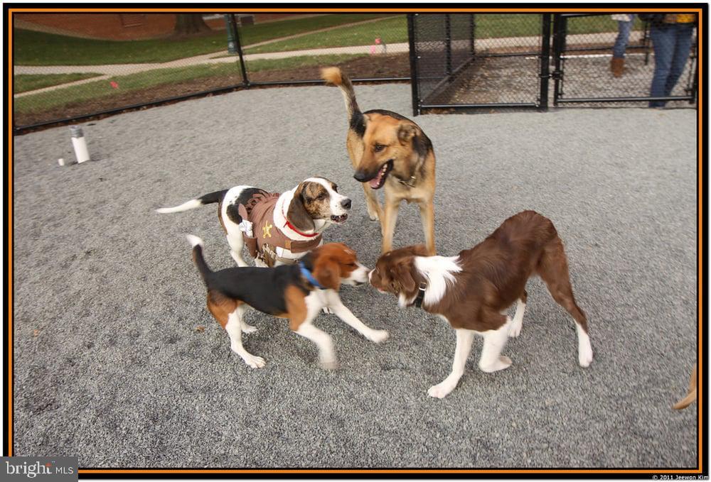 Dog park - 1643 S HAYES ST #2, ARLINGTON