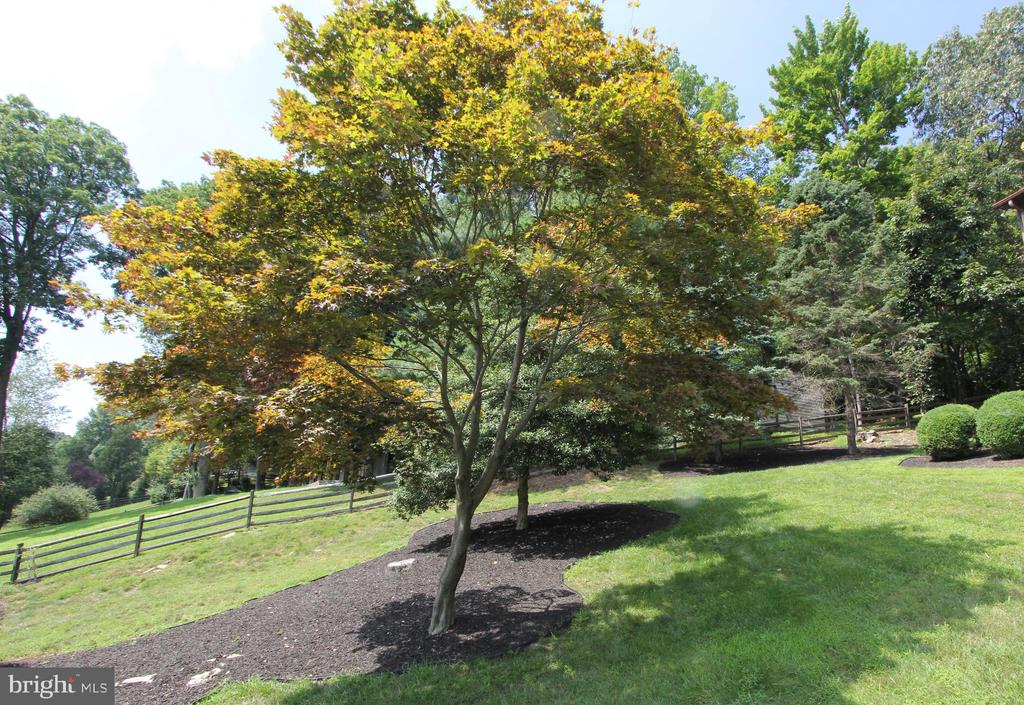 Mature trees and professional landscaping - 5520 BOOTJACK DR, FREDERICK