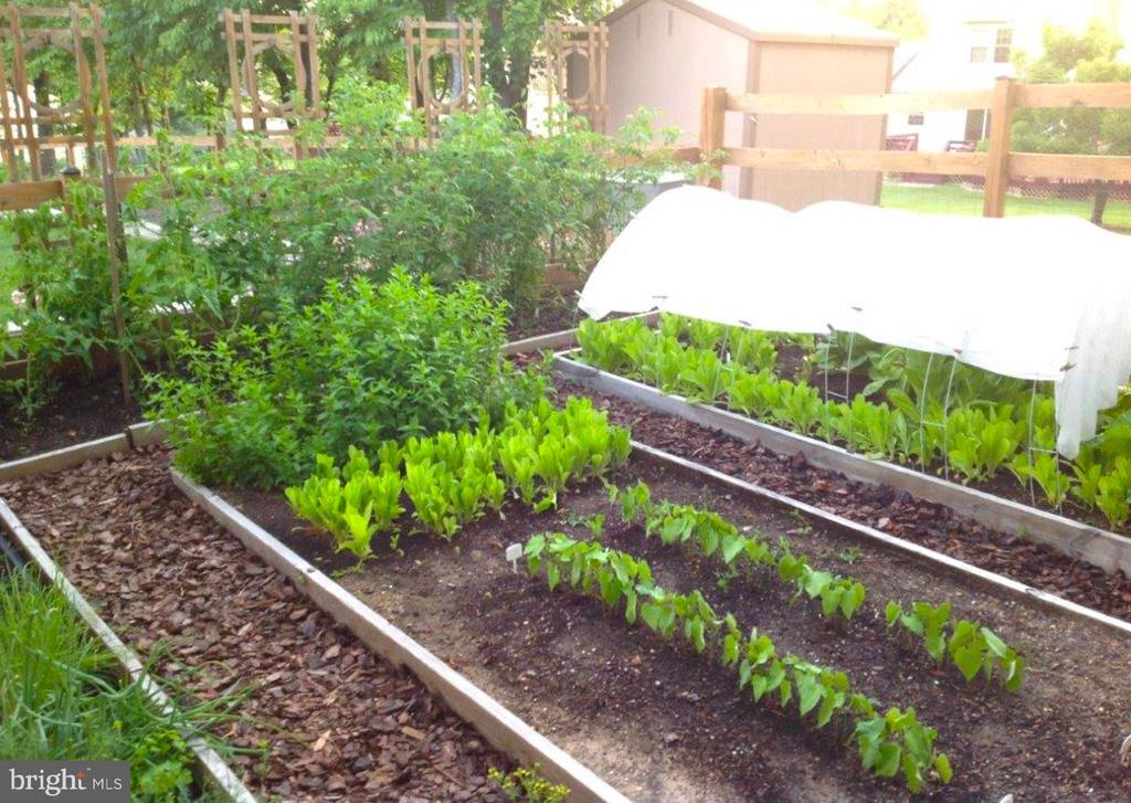 ...grow your own food + really get away from City - 13814 ALDERTON RD, SILVER SPRING