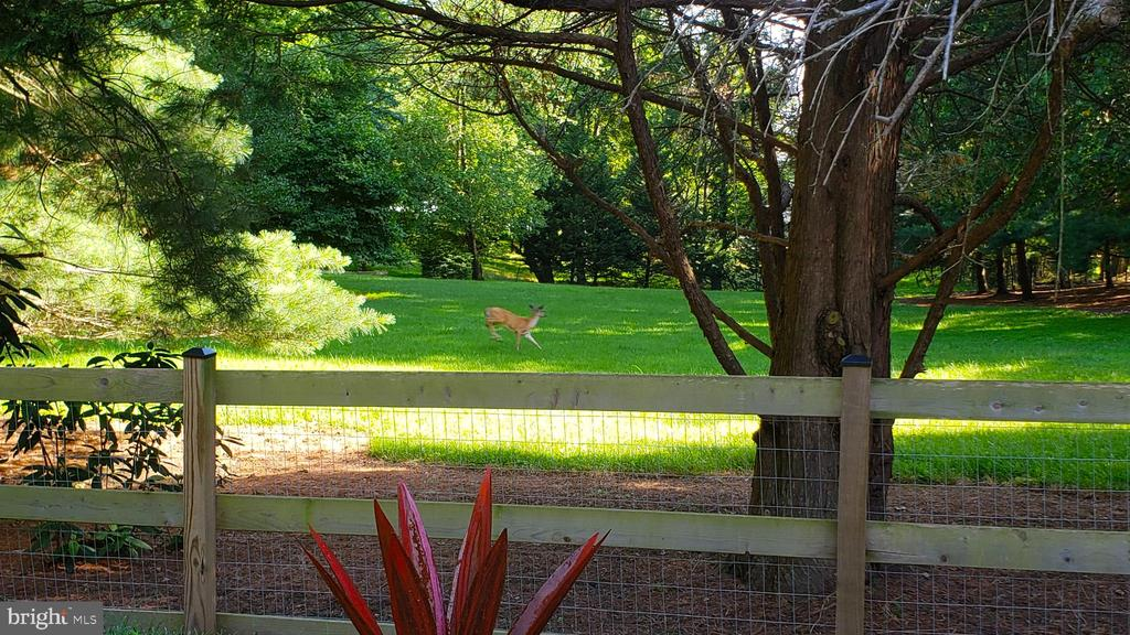 Not uncommon to see resident deer, red fox, hawks - 13814 ALDERTON RD, SILVER SPRING