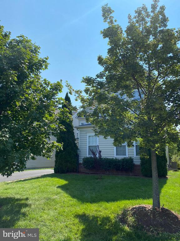 Mature trees - 42939 PARK BROOKE CT, BROADLANDS