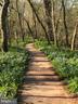 Bluebell lined community walking trail. - 31 BATTERY RIDGE DR, GETTYSBURG
