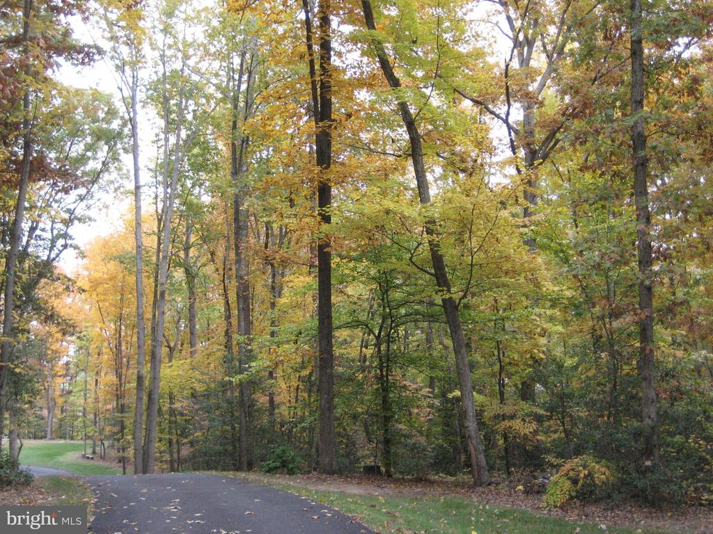 fall view of driveway - 30831 PORTOBAGO TRL, PORT ROYAL