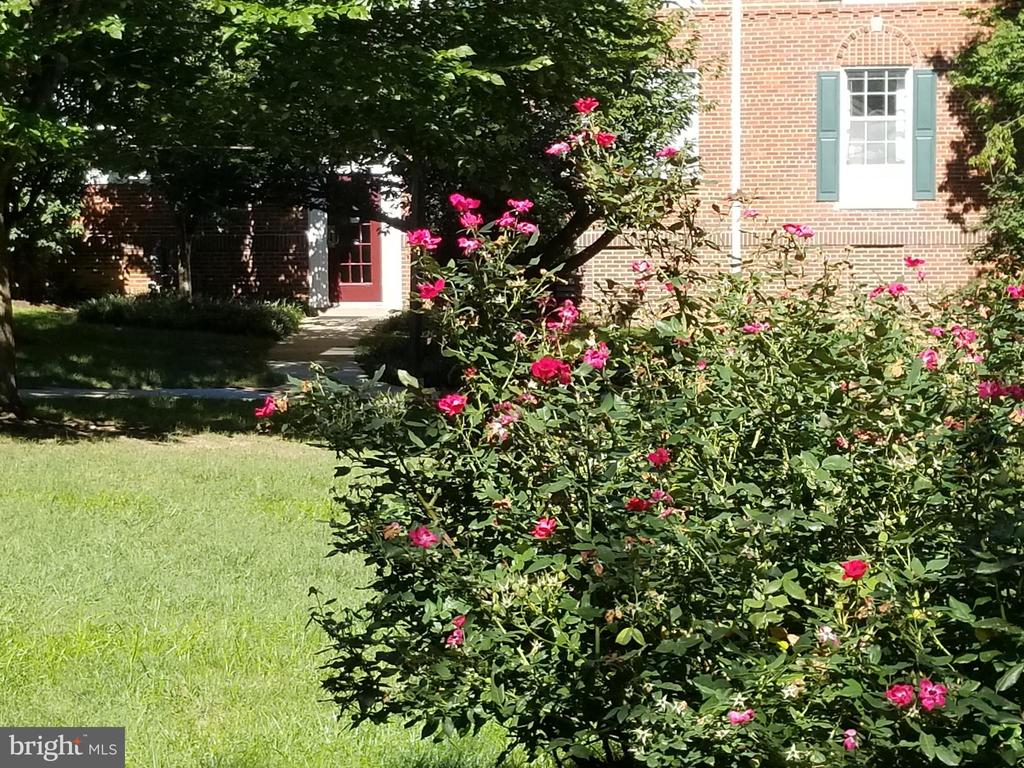 Complete with roses... - 1801 KEY BLVD #10-506, ARLINGTON