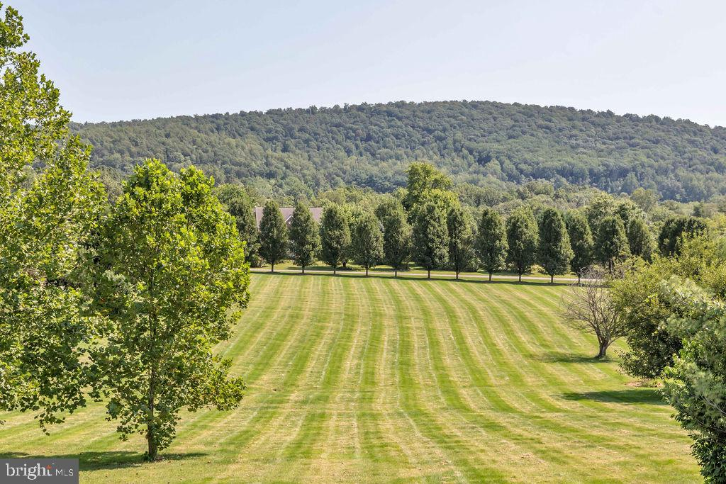 View Out The Front Door - 14079 MERLOT LN, PURCELLVILLE