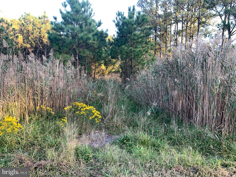 Đất đai vì Bán tại Toddville, Maryland 21672 Hoa Kỳ