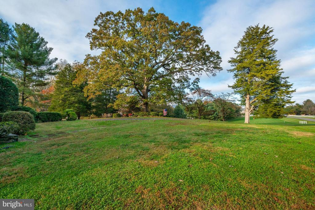 Historic 300 Year Old White Oak Tree - 9621 GEORGETOWN PIKE, GREAT FALLS