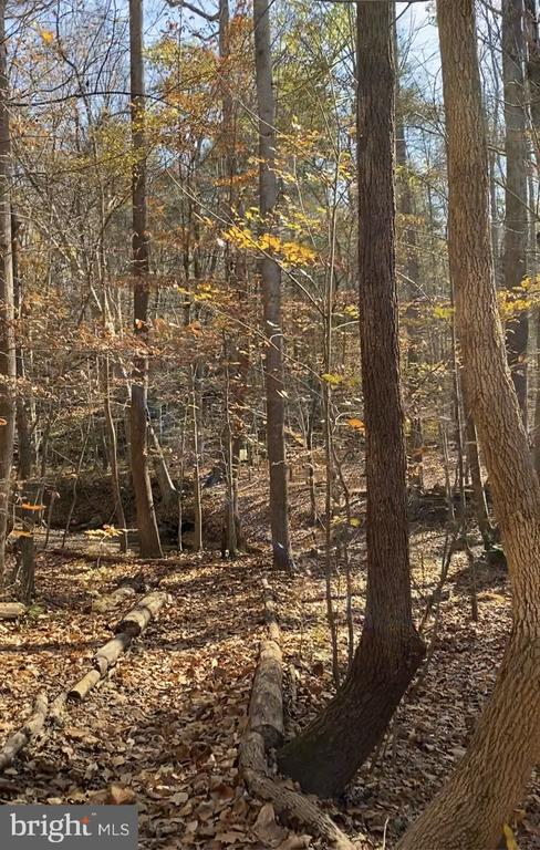 Take the dog & enjoy nature on the hiking trails. - 11798 TARGET CT, WOODBRIDGE