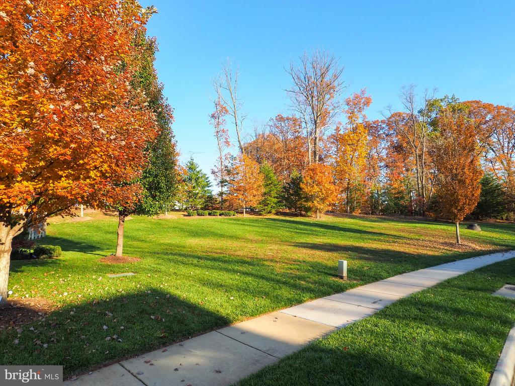 No neighbors on this side - great open space - 14973 SPRIGGS TREE LN, WOODBRIDGE