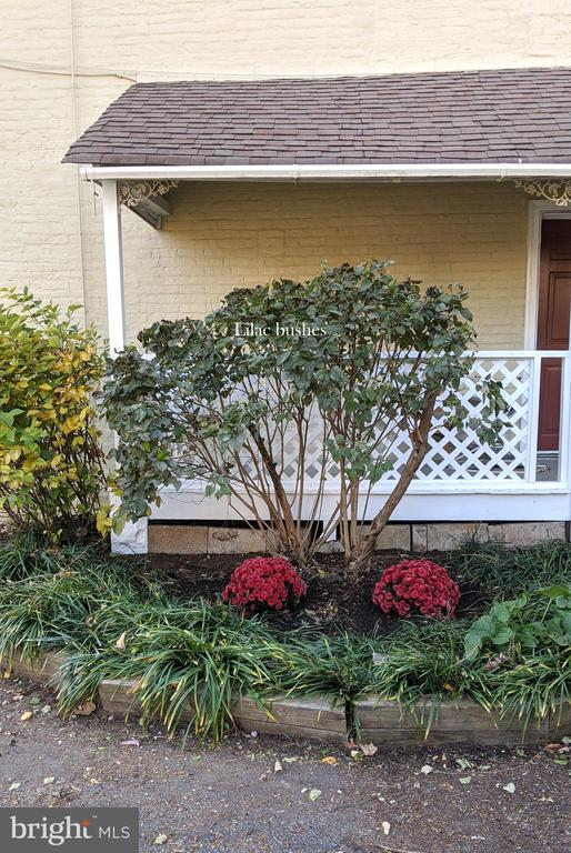 Lilac bushes outside the kitchen - 4343 39TH ST NW, WASHINGTON